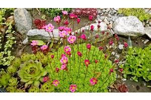 Садові рослини