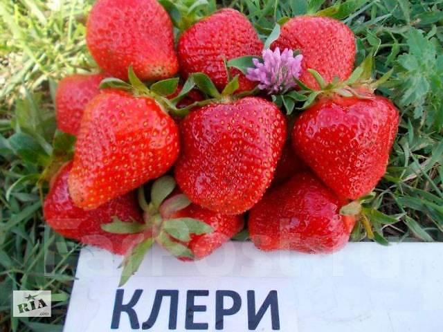 бу Продам розетки клубники в Мелитополе