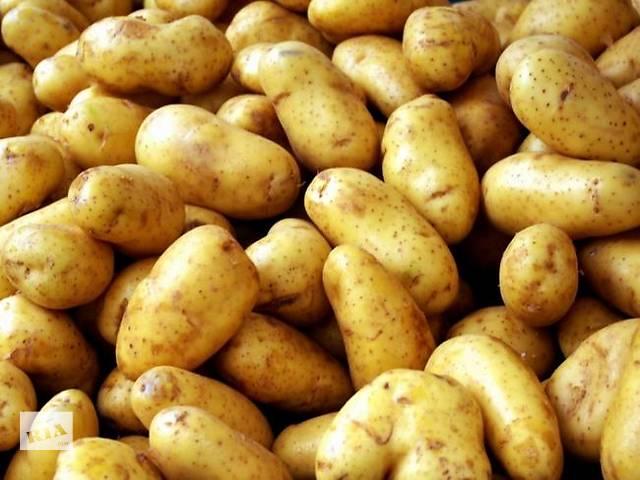 купить бу Продаю посадочный сортовой картофель в Новгород-Северском