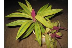 Декоративно-листяні рослини