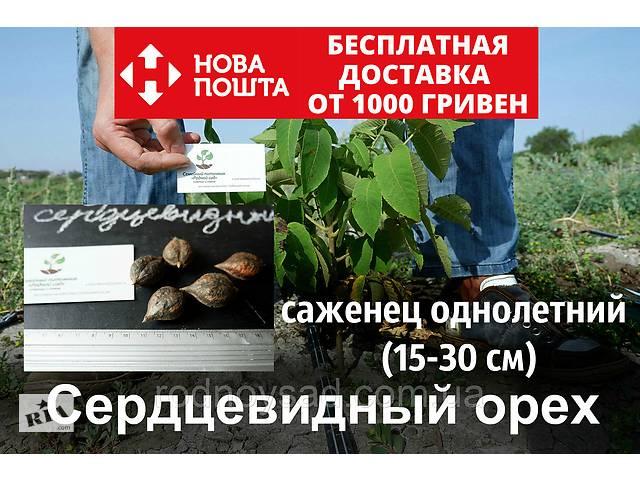 купить бу Сердцевидный орех саженцы (однолетние) с открытой корневой системой в Андреевке