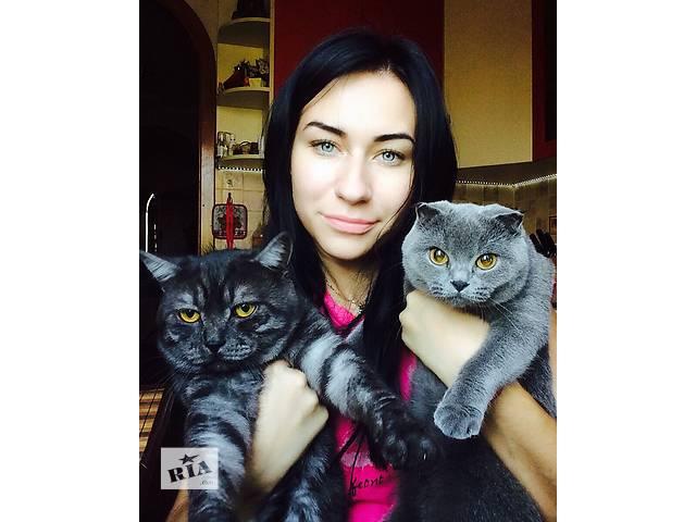 бу Продам британских котят в Донецке