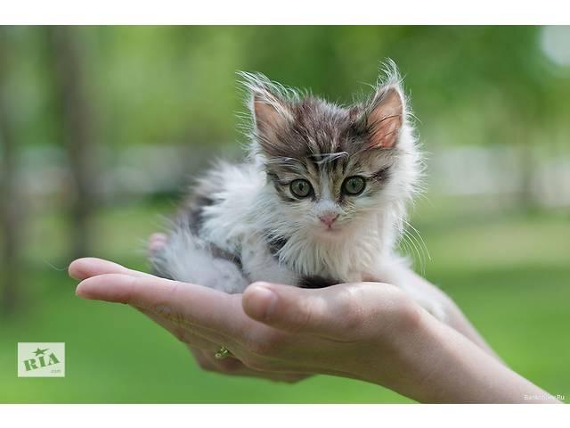 купить бу Продам котят в Киеве