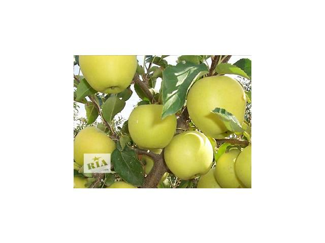 продам Продам яблука бу в Баре (Винницкой обл.)