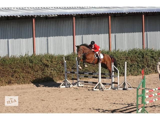 продам Продажа молодых спортивных лошадей бу в Черкассах