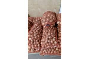 Продам картоплю, цибулю