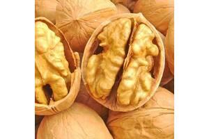 Грецкий (волошский) орех очищенный высшего сорта