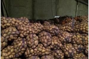 Картофель семенной посадочный и товарный. Доставка