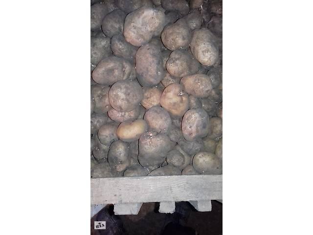 бу картошка домашняя  в Константиновке