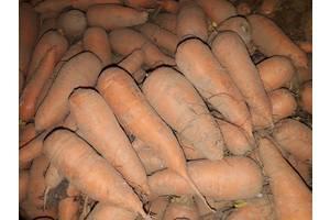 Морковь 2 и 3 сорт от производителя, купить оптом