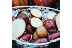 Семенная отборная картошка
