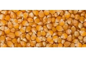 """Семена кукурузы сладкой сахарной сорта """"ЛАКОМКА"""", сорт """"ПОПКОРН"""""""