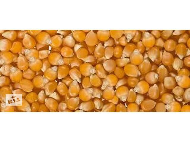 """купить бу Семена кукурузы сладкой сахарной сорта """"ЛАКОМКА"""", сорт """"ПОПКОРН"""" в Гайсине"""
