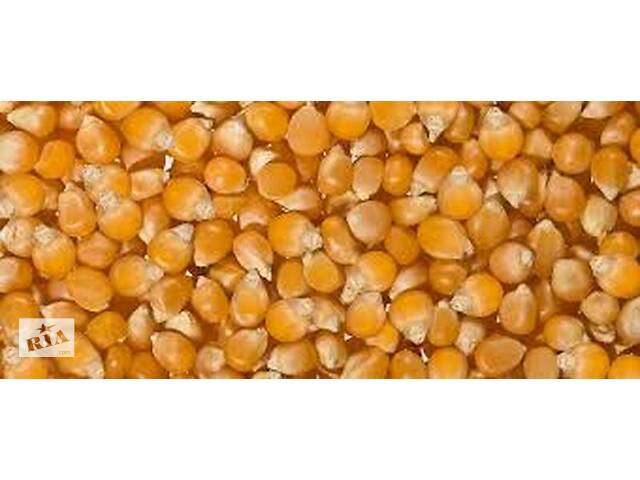 Семена кукурузы сладкой сахарной сорта