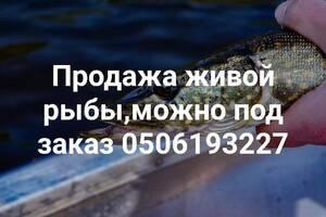 Живая рыба, раки