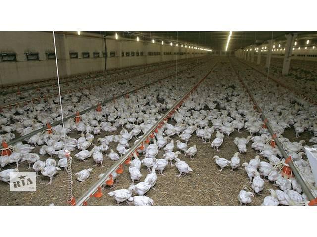 продам Птицекомплекс по выращиванию курицы бу  в Украине