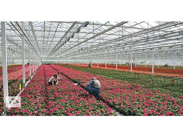 Работа в Польше на цветочных теплицах - объявление о продаже   в Украине