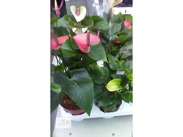 купить бу растения в Амвросиевке