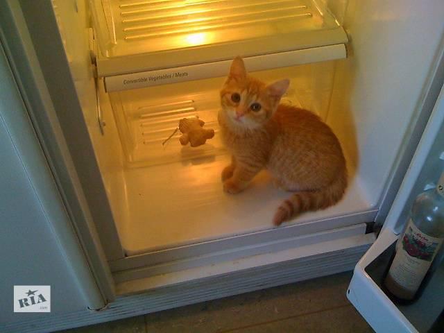 продам Ремонт холодильников на дому у заказчика по Харькову. бу в Харькове