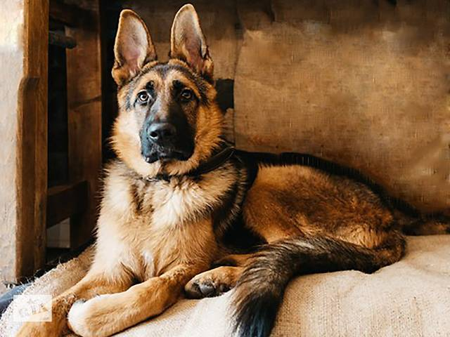 бу Дресерування собак в Тернополі