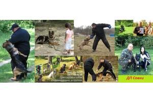 Услуги для животных