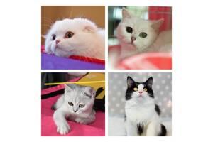 Фотосессия кошек собак