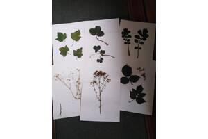 Гербарій листя дерев, рослини, гриби.
