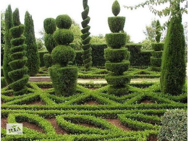 купить бу Оформление ландшафта,стрижа и посев газонов,стрижка и посадка декоративных деревьев и кустарников в Полтавской области