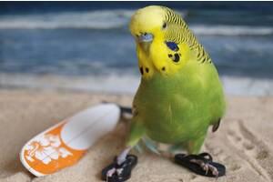 Передержка и уход кошек, грызунов, птиц, пресмыкающихся на время Вашего отпуска!