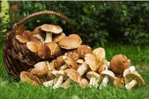 Поездки за грибами каждые выходные