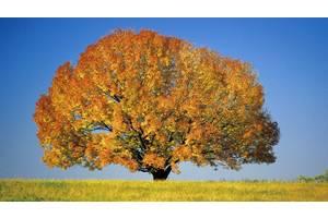 Спилювання порізка та обрізка дерев будь-якої висоти, діаметра та складності.