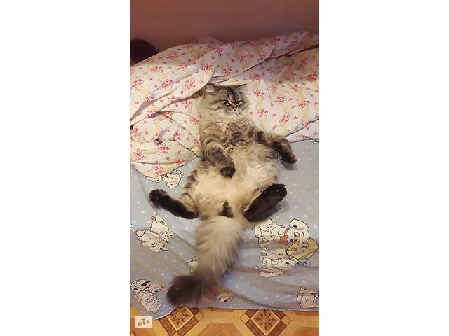 продам Вязка котика британца! бу в Харькове