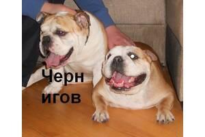 Инструктор для вязки собак