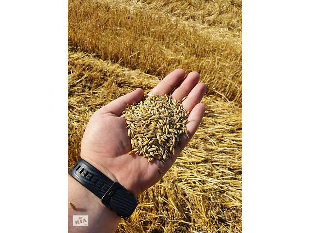 продам Закупка с поля и склада  бу в Запорожской области