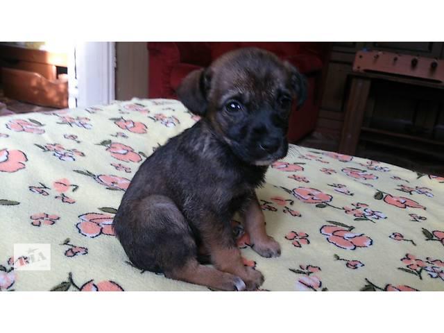 продам щенок бесплатно бу в Донецке