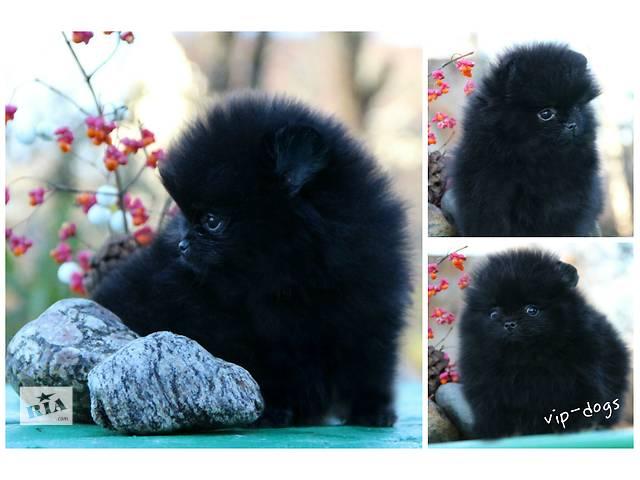 купить бу Сладкий медвежонок пом,черная девочка мини в Харькове