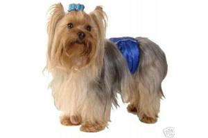 Гигиенические трусики для собак