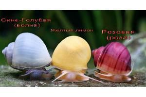 Цветные Креветки, Цветные улитки Ампулярия, зеленые шарики