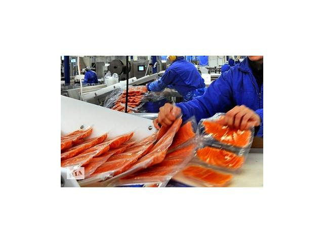 Работник на рыбный завод GADUS