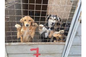 Требуются сотрудники в частный приют для животных по уходу за собаками и котами.
