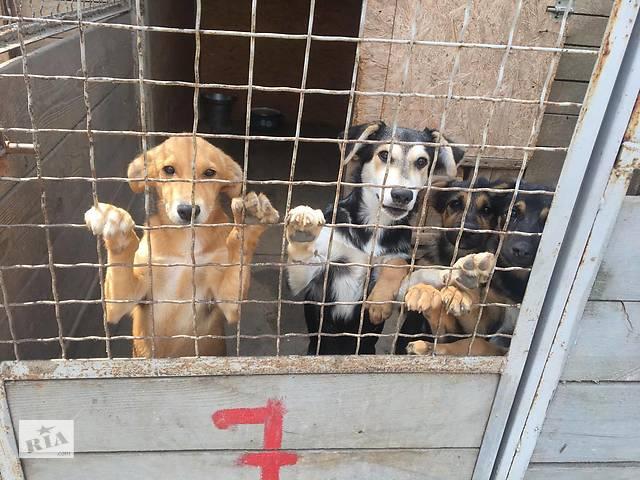 Требуются сотрудники в частный приют для животных по уходу за собаками и котами.- объявление о продаже   в Украине