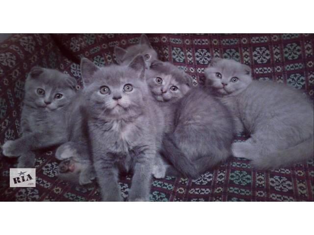 бу Веселі грайливі кошенятка! в Хмельницком