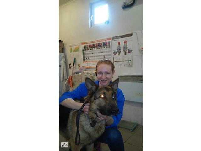купить бу Ветеринарна клініка *Кошкін дом*  в Украине