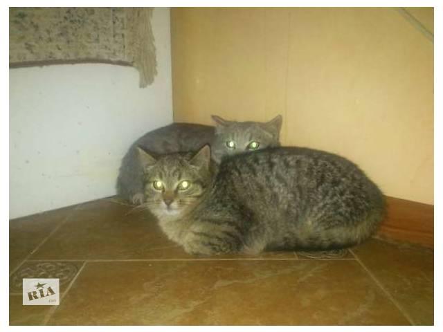 бу Віддам в добрі руки двох гарних котят в Тернополе