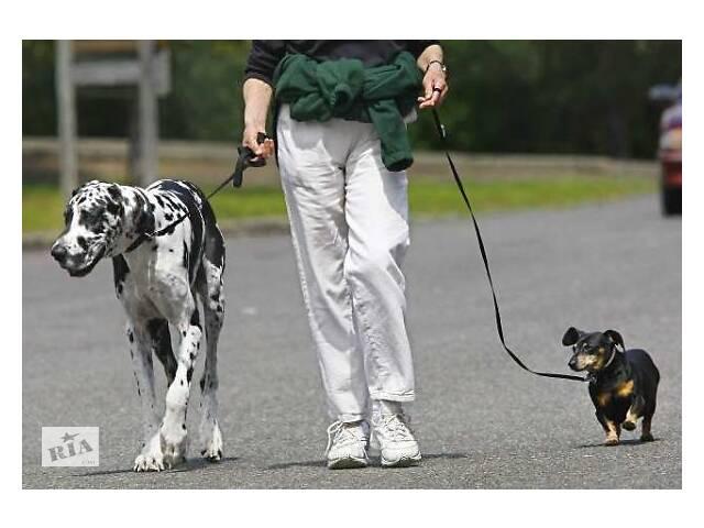 Выгул собак,уход за кошками- объявление о продаже  в Курахово