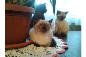 Чудо-котята