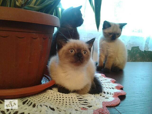 бу Чудо-котята в Ивановке