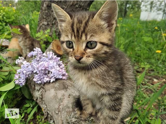 продам Дарю красивых котят бу в Киеве