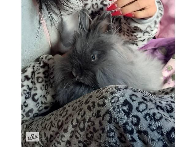 Декоративный ангорского кролик