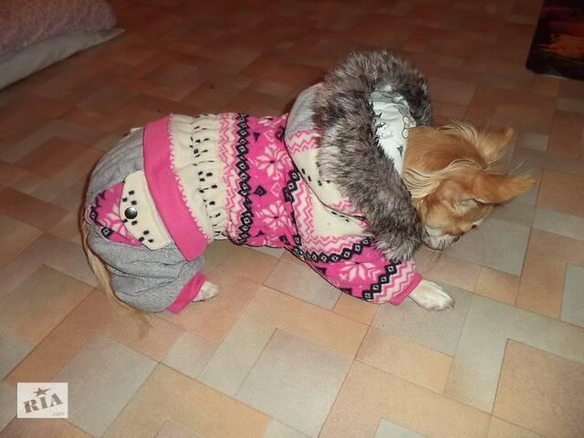 Комбінезон для собаки-дівчинки, комбенизон, одяг, костюм- объявление о продаже  в Полтаві